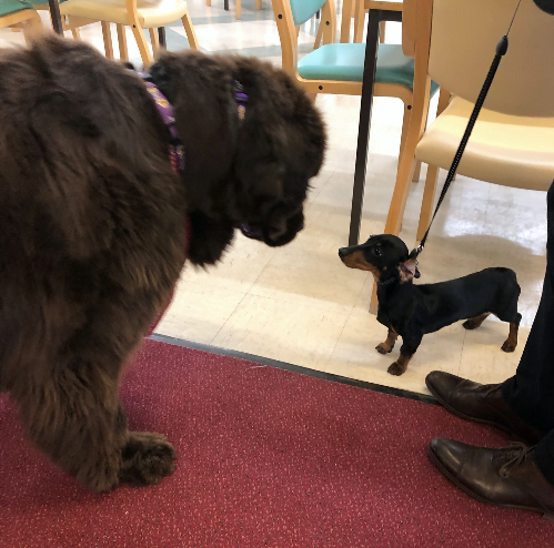 Dogs helping dementia patients