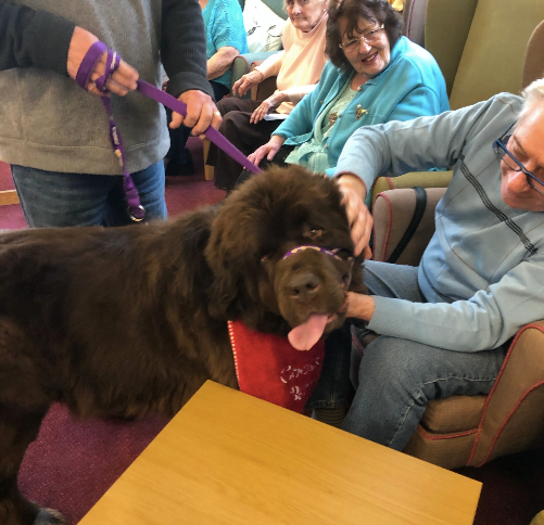 Pets with dementia patients